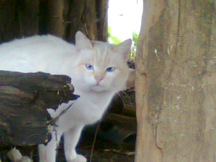 The lovely cat